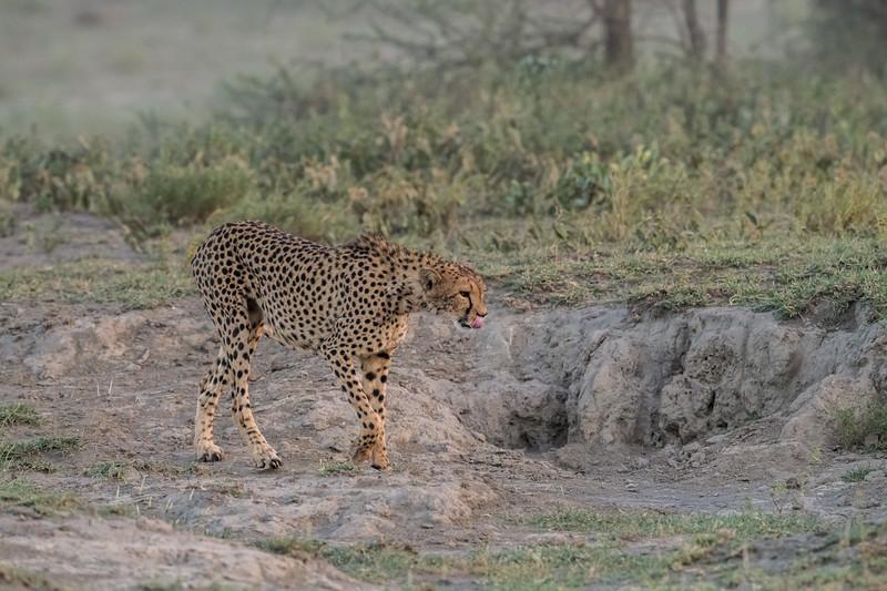 Tanzania_Feb_2018-99.jpg
