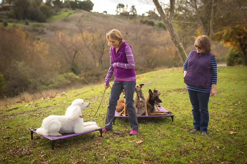 Dog Photos-Edited-65.jpg