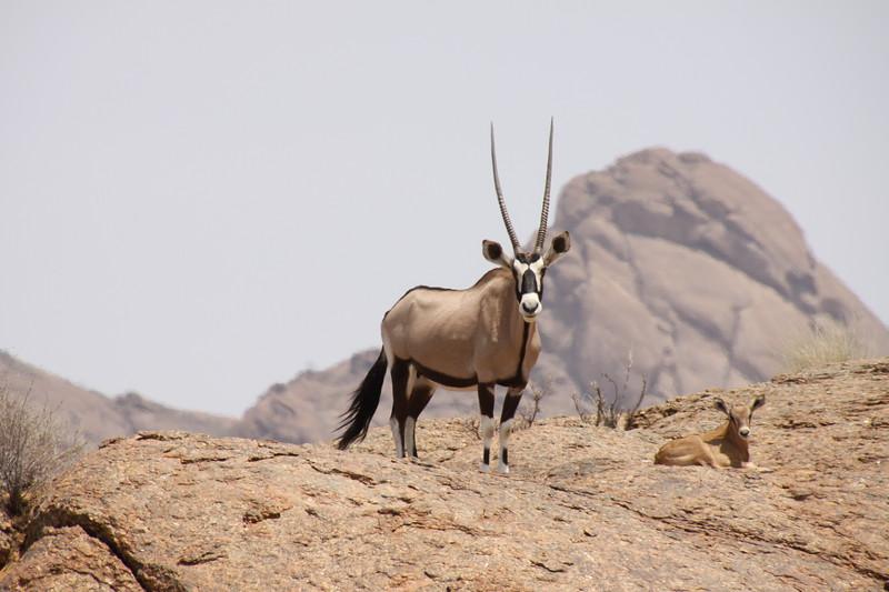 Proud Oryx