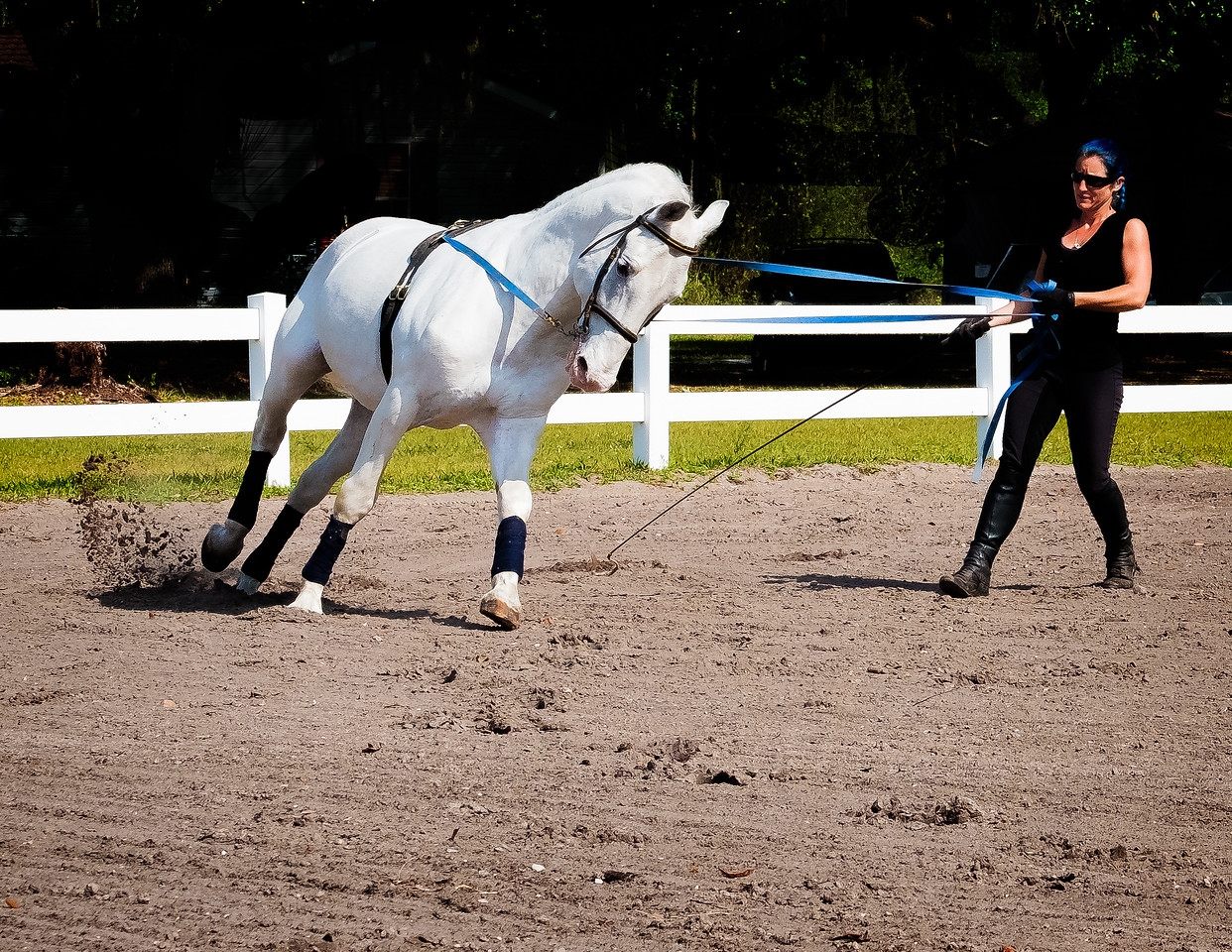STRAINING MUSCULATURE (STALLION & TRAINER)