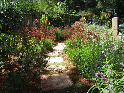 A Garden for Butterflies, Bees, & Hummingbirds