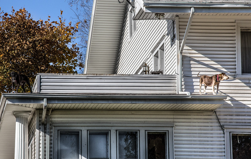 Dog on Roof, Dayton OH