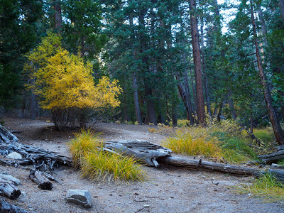 Fall colors along the Vivian Creek Trail 10-27-18