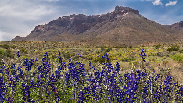 2015 Spring Wildflower Trip to Big Bend, Texas Hill Country