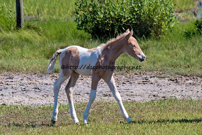 Rainbow Delight's Filly