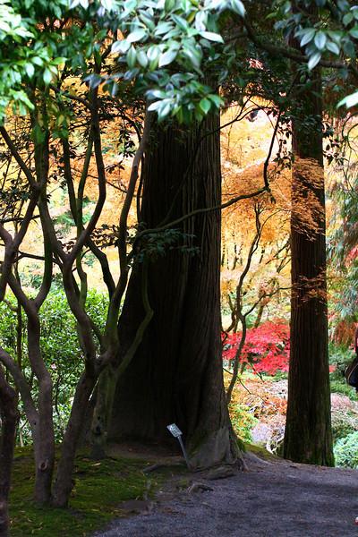 Portland Japanese Garden  11-11-11  3504.jpg