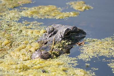 Brazos Bend National Park