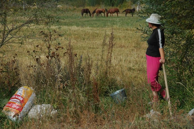 Kyrgyz Woman and Potato Picking - Lake Issyk-Kul, Kyrgyzstan