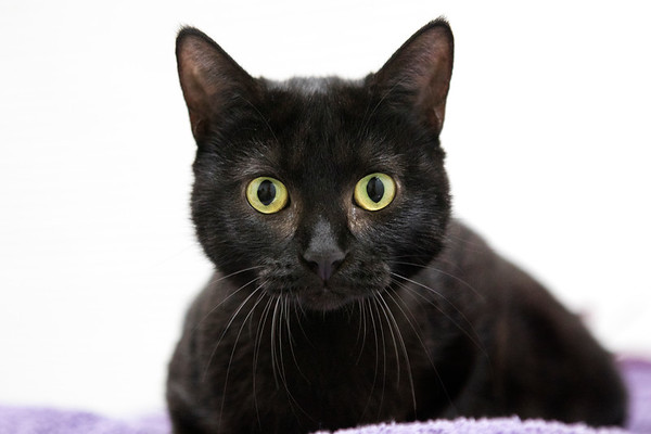 IAR-kitty-black-shorthair-09-13-17
