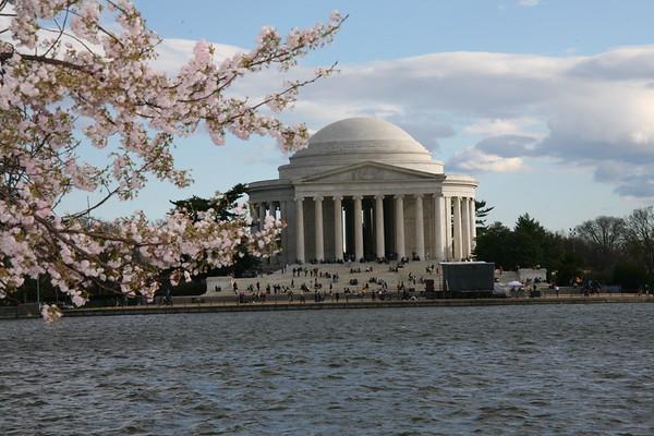 Cherry Blossom - Washington April, 2009