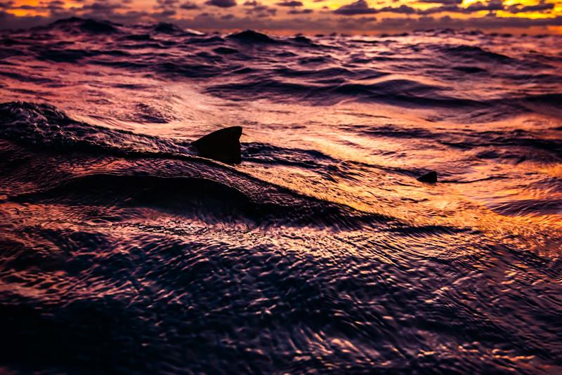 IdolJennifer_sharkSafari-42.jpg
