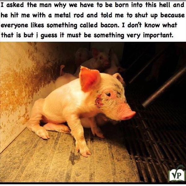 The_fact_that_people_do_this_and_continue_to_support_this_business_by_buying_animal_meat_and_products_is_just_sickening._How_do_you_sleep_at_night_Bunch_of_demon_possessed_selfish_ignorant_sinners._These_animals_will_have_peace_when_the_creator_of_th.jpg