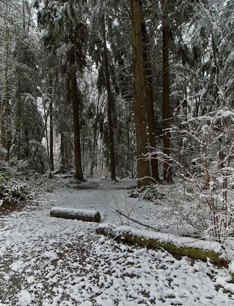 Snow day 1 240.jpg