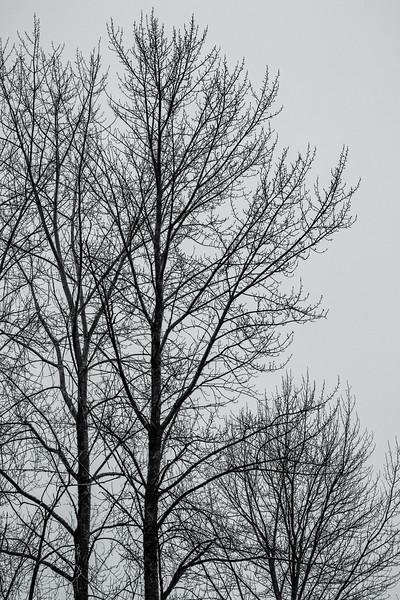 2018_02_05_untitled 0017-Edit.jpg