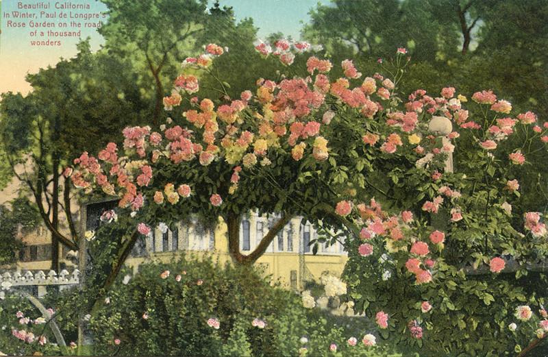 Rose Garden in Winter