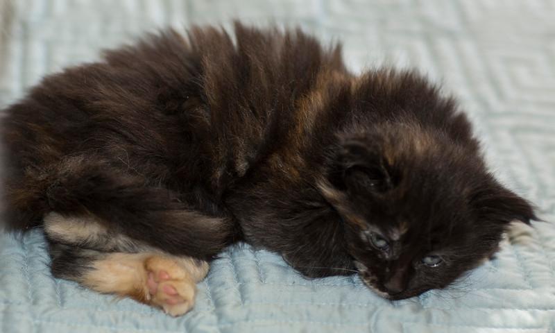 Kittens255.jpg