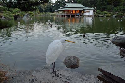 Kiyosumi Gardens 清澄庭園