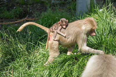 Oakland Zoo August 2014