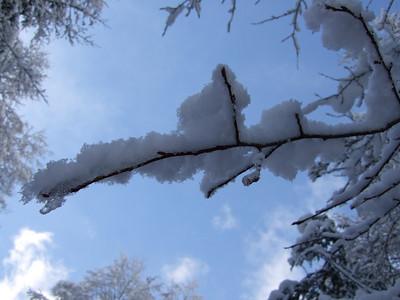 Snowshoe Hikes