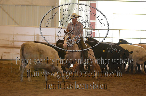Southern Stockhorse Association Show April 11-12, 2014