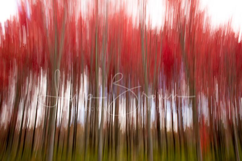 Red trees stretch.jpg