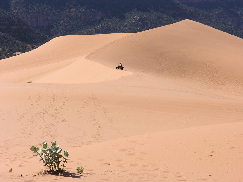 Coral Pink Sand Dunes - & ATV - KCOT.jpg