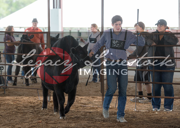 McPherson County Heifer Candids