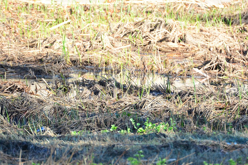 Find the Snipes - there are two in here - 12/09/2014 - Poway Creek