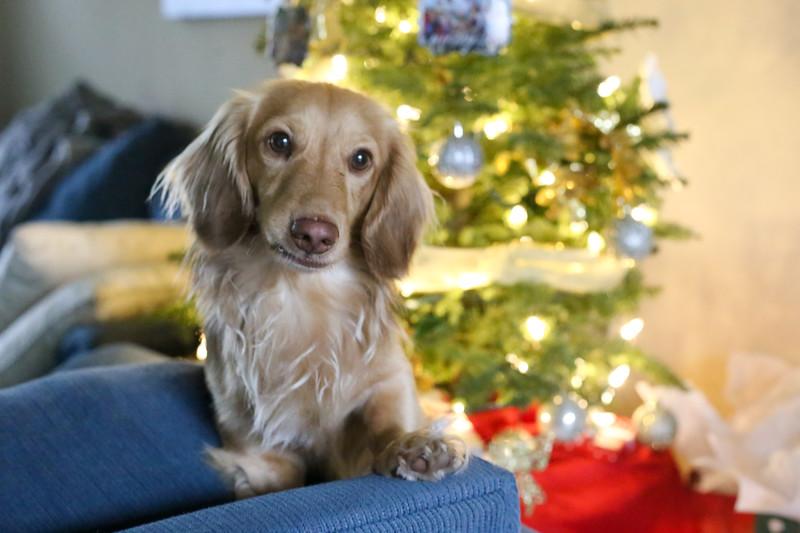 2019-12-22_ChristmasDecor-4450.jpg