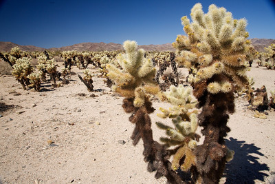 Joshua Tree Park and Pioneertown - Calif