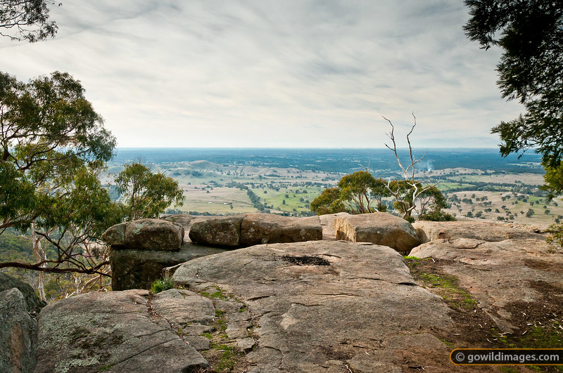 Mt Alexander lookout, at the north end of the park, mid-Winter.