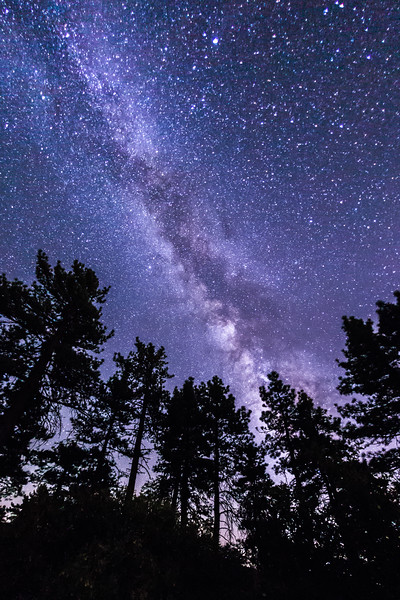 Trees and the Milky Way in Noble Canyon