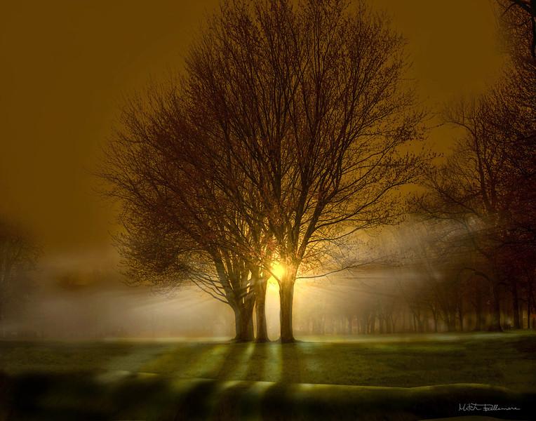 brightsunrisetree11x14.jpg