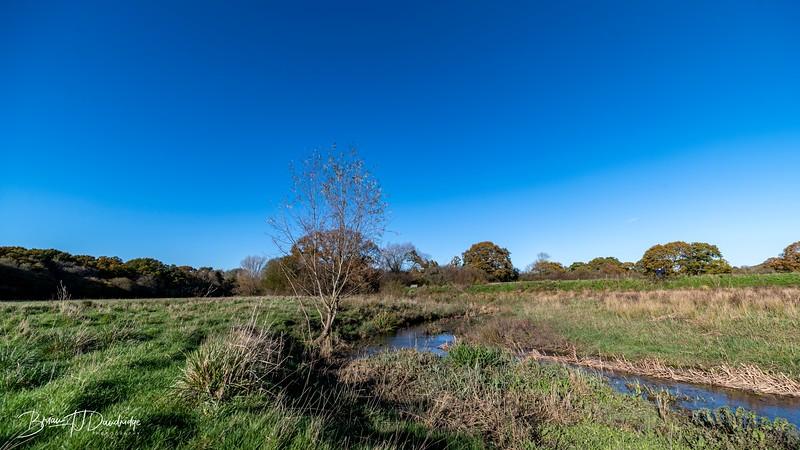 Woods Mill-5339.jpg