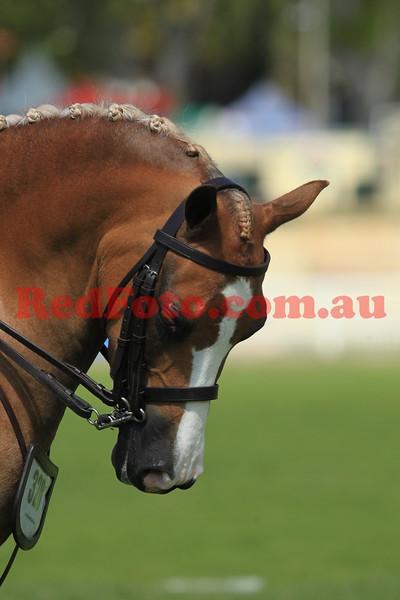2014 09 26 Perth Royal Show Novice Show Hunter Pony