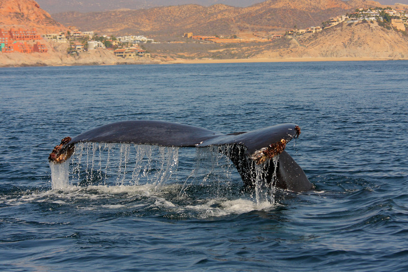 Mexico_Cabo_Whales 06.JPG