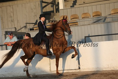12. Adult 3 Gaited Country Pleasure