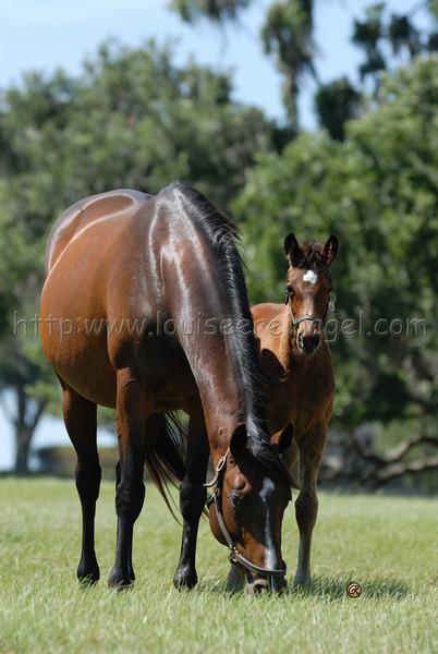 Florida Mare  & Foal