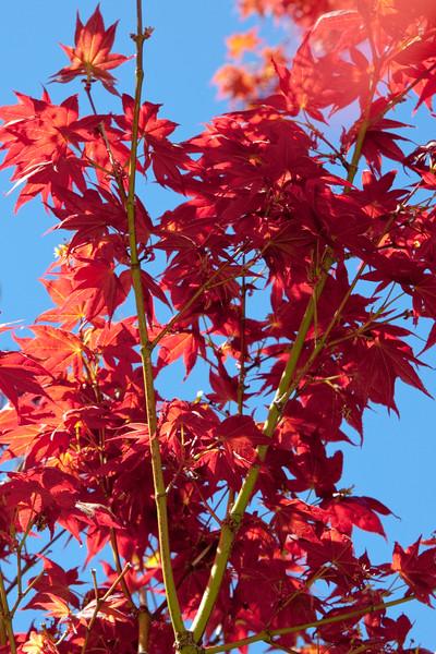 Hakone_Gardens-18.jpg