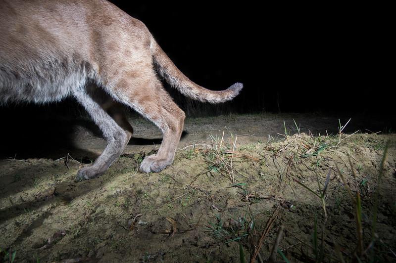 panther 12.jpg