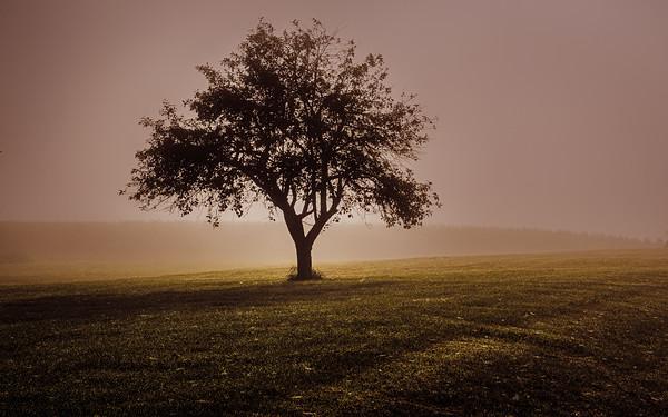 Tree Landscapes