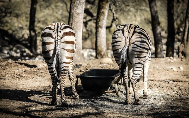 SafariWest2017-6.jpg