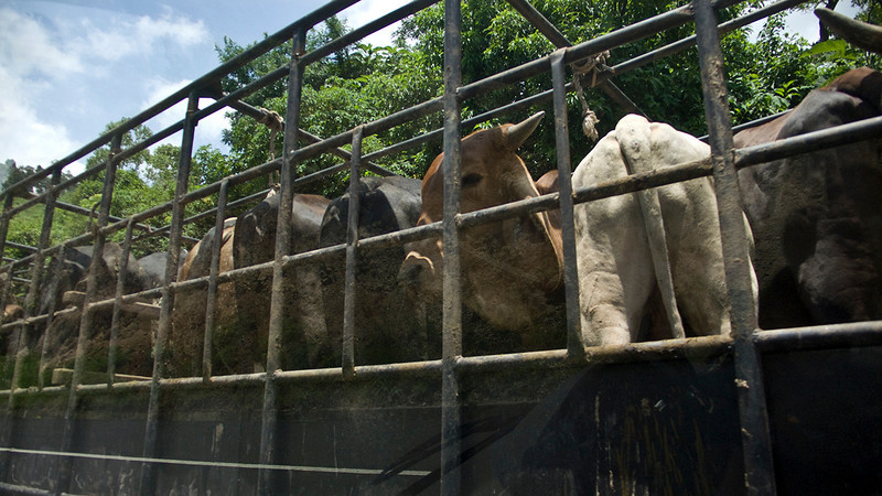Guatemala 2010  049.jpg
