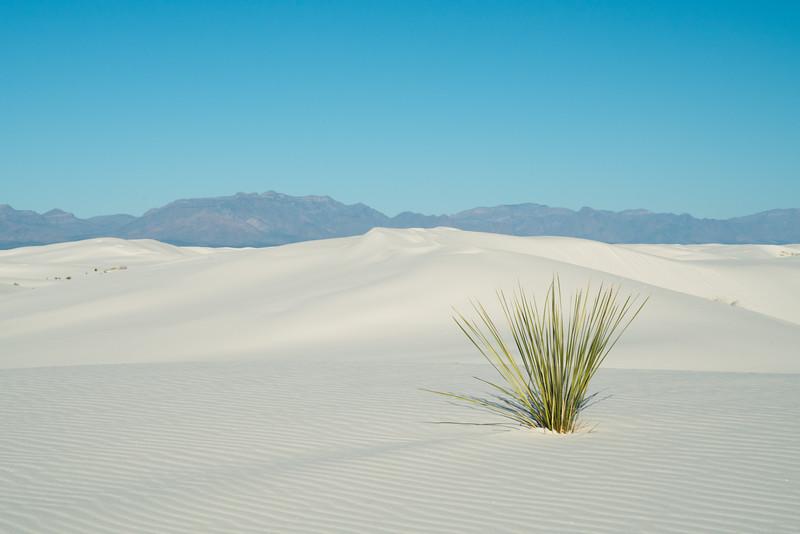 White Sands NP 2020-11.jpg