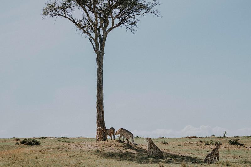 Tu Nguyen Destination Wedding Photographer Kenya Elopement Vivian Andy-78 copy.jpg
