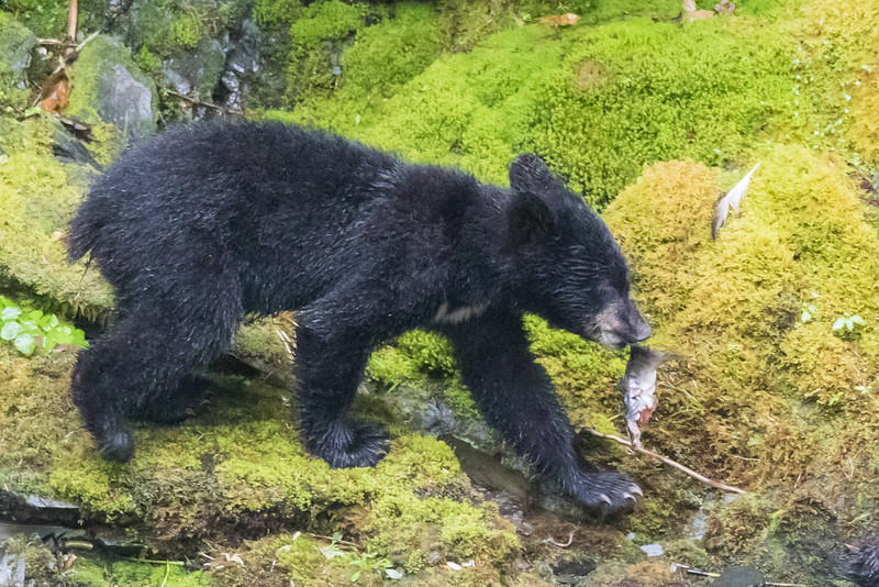 Alaska 2015 - Ketchican -  072815-196.jpg