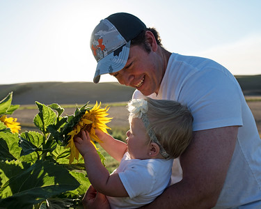 Dennis Family - 2016 Sunflowers