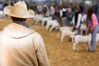 2016 Bexar County Livestock