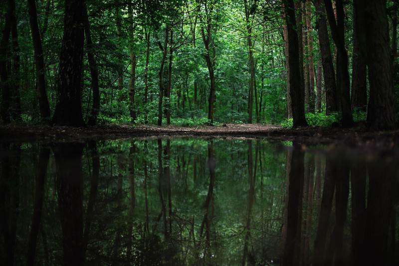 forest reflection.jpg