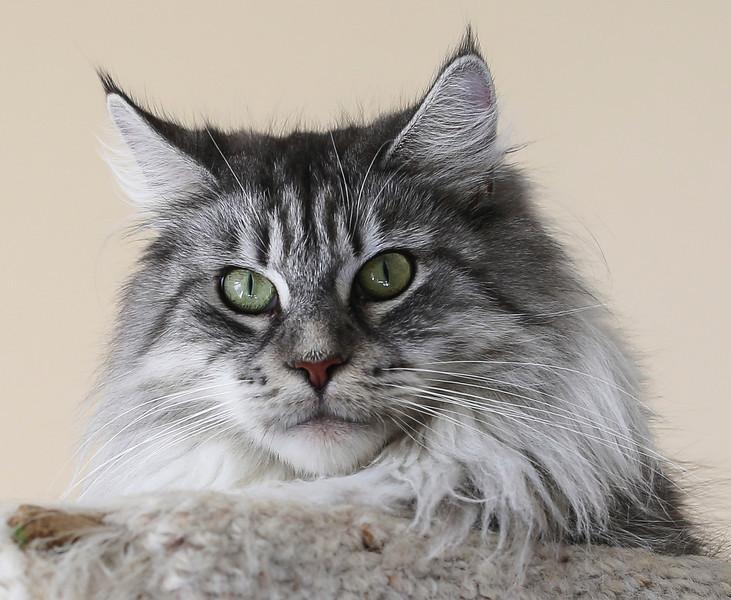 Kittens302.jpg